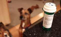 Is it Time to Start Treating your Dog with CBD?