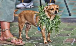 Do You Know This Hidden Benefit of CBD for Dogs?